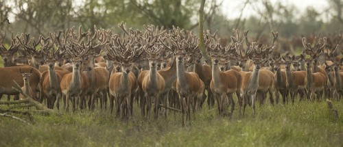 Die neue Wildernis - Große Natur in einem kleinen Land Blu-ray Review Szene 4