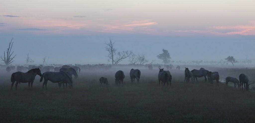 Die neue Wildernis - Große Natur in einem kleinen Land Blu-ray Review Szene 5