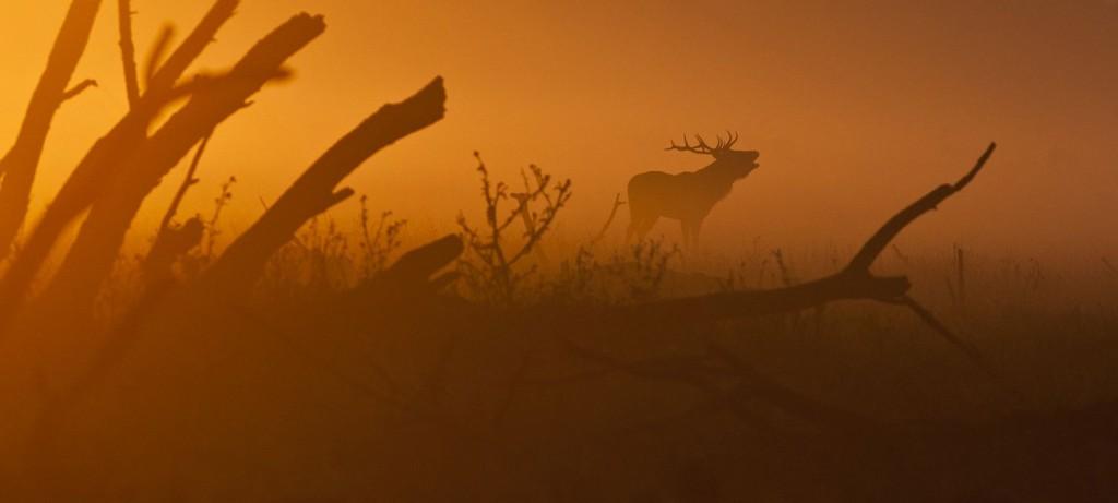 Die neue Wildernis - Große Natur in einem kleinen Land Blu-ray Review Szene 9