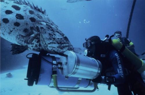 Atlantis - Symphonie des Ozeans Blu-ray Review Szenenbild 3