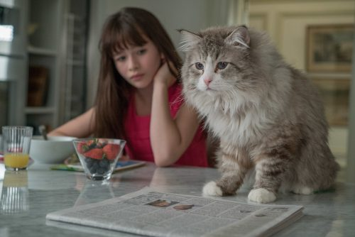Voll verkatert Blu-ray Review Szene 2
