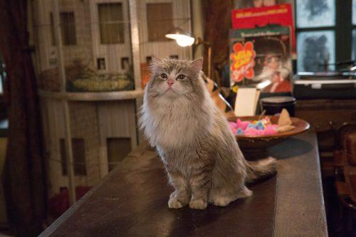 Voll verkatert Blu-ray Review Szene 5