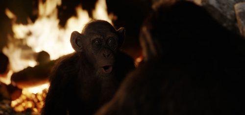 Planet der Affen Survival 4K UHD Blu-ray Review Szene 13