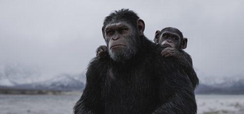 Planet der Affen Survival 4K UHD Blu-ray Review Szene 4