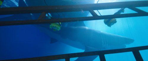 47 Meters Down Blu-ray Review Szene 2