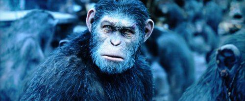 Planet of the Apes Survival Bildvergleich BD vs UHD 5