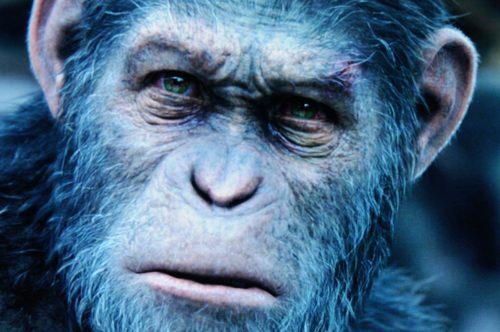 Planet of the Apes Survival Bildvergleich BD vs UHD 7