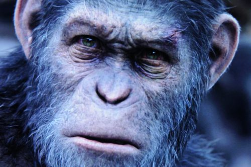 Planet of the Apes Survival Bildvergleich BD vs UHD 8