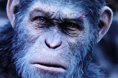 Planet of the Apes Survival Bildvergleich BD vs UHD 8