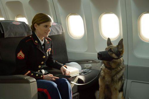 Sergeant-Rex-Nicht-ohne-meinen-Hund-Blu-ray-Review-Szene-11.jpg