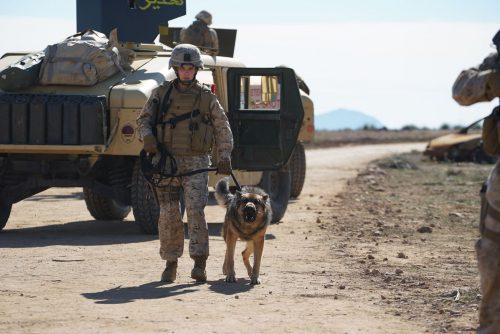 Sergeant-Rex-Nicht-ohne-meinen-Hund-Blu-ray-Review-Szene-6.jpg