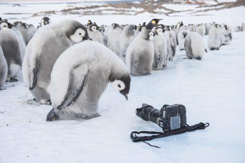 Die Reise der Pinguine 4K UHD Blu-ray Review Szene 1
