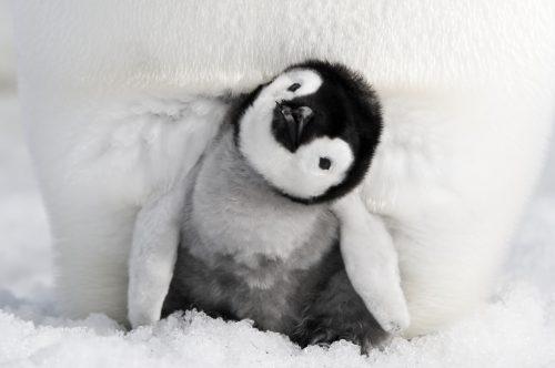Die Reise der Pinguine 4K UHD Blu-ray Review Szene 2