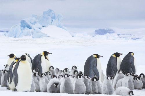 Die Reise der Pinguine 4K UHD Blu-ray Review Szene 4