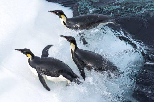 Die Reise der Pinguine 4K UHD Blu-ray Review Szene 6