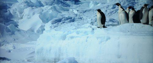 Reise der Pinguine 2 Blu-ray vs. UHD Bildvergleich 3
