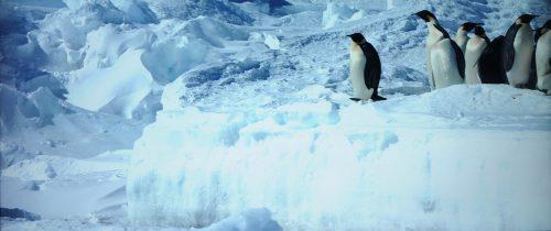 Reise der Pinguine 2 Blu-ray vs. UHD Bildvergleich 4