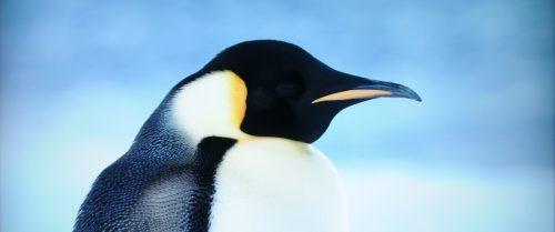 Reise der Pinguine 2 Blu-ray vs. UHD Bildvergleich 5