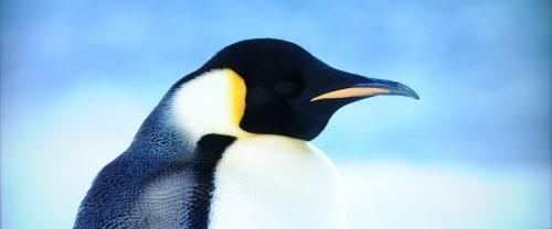 Reise der Pinguine 2 Blu-ray vs. UHD Bildvergleich 6