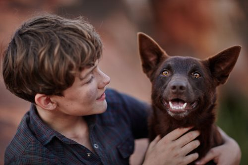 Red Dog Blu-ray Review Szene 4